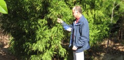 Tree Appraisal and Valuation